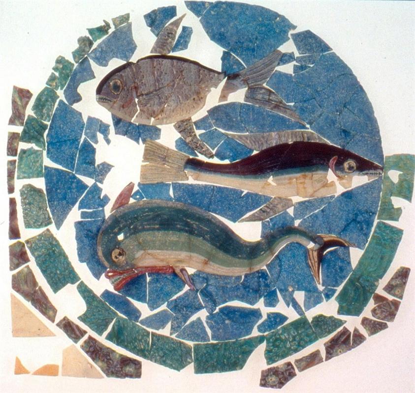 Una domus romana sul mare la casa del chirurgo di rimini for Pesci con la e